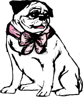 Pug with bow